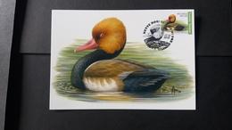 """BUZIN - Carte Oiseaux CM : Numéro 4759 """"Nette Rousse"""" - Maximum Cards"""