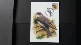 """BUZIN - Carte Oiseaux CM : Numéro 4840 """"Hirondelle De Rivage"""" - Maximum Cards"""