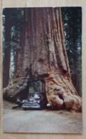 Yosemite National Park Wawona Tree California USA - Yosemite
