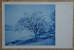 Obstbaum Blüte - Unclassified