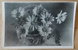 Margeriten - Flores