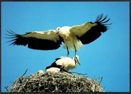 D4798 - TOP Storch - Bild Und Heimat Reichenbach Qualitätskarte - Vögel