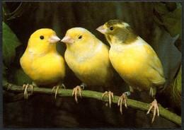 D4800 - TOP Kanarienvogel - Bild Und Heimat Reichenbach Qualitätskarte - Vögel