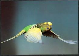 D4801 - TOP Wellensittich - Bild Und Heimat Reichenbach Qualitätskarte - Vögel