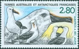 TAAF 1990 -  Oiseau - L'Albatros à Bec Jaune - 1 V. - Marine Web-footed Birds