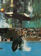 Killer Whale At Windsor Park Rodeo Ride Windsor Safari 1970s 2x Postcard - Dolphins