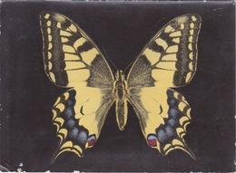 THEME - PAPILLONS - PAPILLON MACHAON - PAPILIO - - Papillons