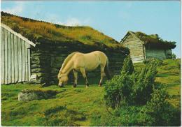 Aniamux :  Cheval , Fjording , Vestlandet , Norway - Cavalli