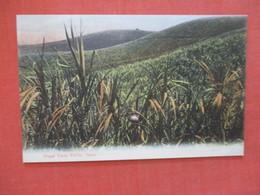 Sugar Cane Fields Natal  Ref 3957 - Cartes Postales