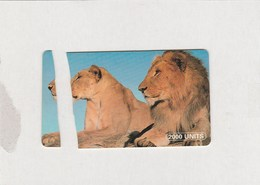Tanzania - Lions - Read Description ! - Tanzania
