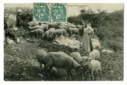 "Lot De 14 CP Thèmes ""Agneaux, Brebis, Moutons "" Circulé Et Non Circulé - Other"
