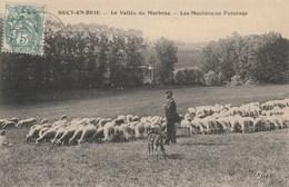 CPA  (94)  SUCY EN BRIE  Vallée Du Morbras Moutons Au Pâturage Ovin Berger  (R.V)  D 394 - Sucy En Brie