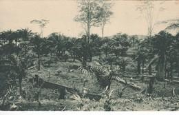 POSTAL DE GUINEA ESPAÑOLA DE UN DESBOSQUE CON PALMERAS SILVESTRES DE ACEITE (EXPO IBERO-AMERICANA SEVILLA 1929) - Equatorial Guinea