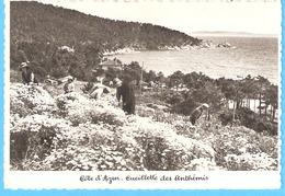 Corniche Des Maures (Environs De Cavalaire-sur-Mer-Var)-Cueillette Des Fleurs Anthémis (camomille)-Fleur-+/-1910 - Cavalaire-sur-Mer