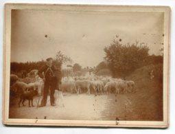 PHOTOGRAPHIE 0052 Berger Gardien  Moutons Et Ses 2 Chiens   Dim 17 Cm X 12 Cm - Photos