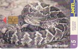 Nº 84 (CHIP NEGRO) TARJETA DE URUGUAY DE UNA VIBORA DE CASCABEL (SNAKE-SERPIENTE) - Uruguay