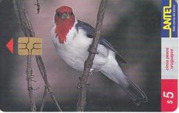 Nº 80 (CHIP ROJO) TARJETA DE URUGUAY DE UN PAJARO CARDENAL DE 5$ (BIRD) - Uruguay