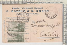 CAIRANO AVELLINO PUBBLICITARIA ALLEVAMENTI E. MAZZEO 1927 PER CALITRI - Marcofilie