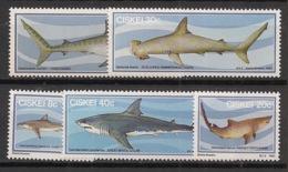 Ciskei - 1983 - N°Yv. 38 à 42 - Requins / Sharks - Neuf Luxe ** / MNH / Postfrisch - Ciskei