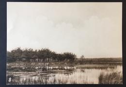 "PEER - 20,5x14,5 Cm - ORIGINELE FOTO - ""De Oude Kempen"" - 1902 - Edmond JAMINÉ - Veen - Peer"