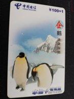 CHINA    PINGUIN      CARD Used **1163** - China