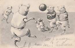 CPA Animal Humanisé Position Humaine Cochon Porc Pig Sport Jeu Football Illustrateur Anonyme  (2 Scans) - Pigs