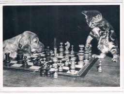 Chat Et Chien Jouer  échecs- Cat Dog -katze  - Poes En Hond Schaken - Chats