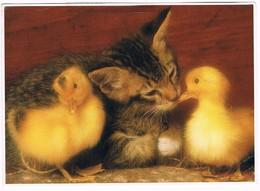 Chat Et Canard -kitten, Cat -katze-  Poes En Eendjes - Chats