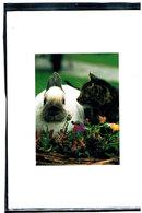 Chat Et Lapin- Cat Rabbit -katze-  Poesje En Konijn - Chats