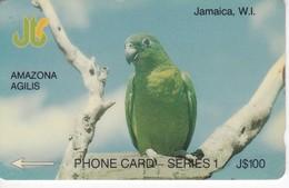 TARJETA DE JAMAICA DE UN LORO (PARROT) 11JAMC - Jamaica