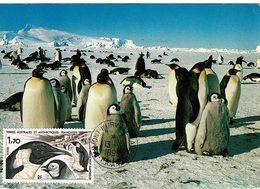 Carte Postale Abeille-cartes Photo Robert Guillard Oblitération 1999 Penguin Manchots - Briefe U. Dokumente