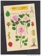 """FRANCE / 1999 / Y&T N° 3248/3250 ** En Bloc Ou BF N° 24 ** (Feuillet """"Roses Anciennes"""") X 1 - Mint/Hinged"""