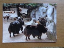 Zoo Van Antwerpen -> Onbeschreven - Antwerpen