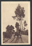 +++ CPA - THIELEN - TIELEN - Kasterlee - Vers Le Moulin - Attelage  // - Kasterlee
