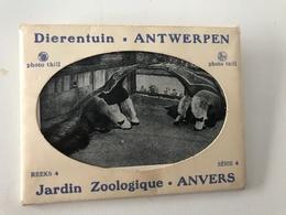 Pochette De 7 Petites Photographies Anciennes Dierentuin ANTWERPEN REEKS 4 - Série 4 - Antwerpen