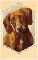 CHIEN [ TECKEL / BASSET / DACHSHUND ] - NEURO 4117 / NEURODER KUNSTANSTALTEN AG. - BERLIN W 9 ~ 1930 - '940 (ae462) - Dogs