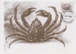 Carte  Maximum  1er  Jour     ISLANDE    Crabe   1985 - Cartoline Maximum