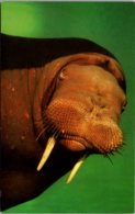 California Palos Verdes Marineland Of The Pacific Woofy The Walrus - Vereinigte Staaten
