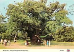 CPSM Nottinghamshire-Major Oak In Sherwood Forest                 L3021 - England