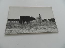 Cp  Vache   A Corne - Vaches