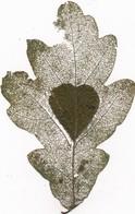 J83 - MILITARIA - Feuille De Chêne Repercée à L'aiguille  - Symbole Du Coeur - Travail D'Art Populaire Et De Tranchée - Andere