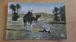 CSM - 2136. SCENES ET TYPES -  Prière Dans Le SAHARA - Westsahara