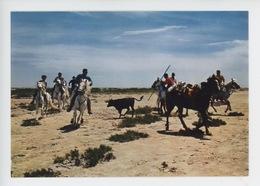 En Camargue : La Ferrade (gardian Cheval Taureau) N°0023 - Saintes Maries De La Mer