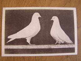 LE HAUT VOLANT BELGE Pigeon Colombophilie H. Versteeg Pigeons Concours Description Race Bird Oiseaux Carte Postale - Pájaros