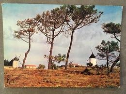 VENDEE CPM NOIRMOUTIER LA GUERINIERE - Noirmoutier