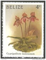 204 Belize Orchidee Orchid Cypripedium MNH ** Neuf SC (BLZ-23) - Orchids
