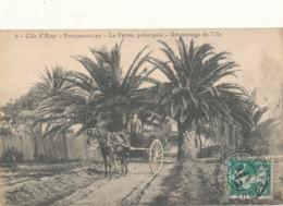 83 // PORQUEROLLES    Ferme Principale  Un Paysage De L'Ile  6 - Porquerolles