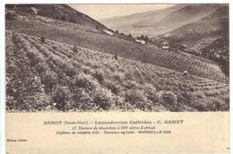 CPA 04 ANNOT Lavanderaies Cultivées C GAMET Médaille D'Or Concours Agricole Marseille 1922 - France