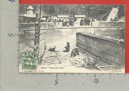 CARTOLINA VG SVIZZERA - BERNE - Fosse Aux Ours - 9 X 14 - 1906 - BE Berne