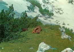CPSM Fauna Del Parco Nazionale D'Abruzzo                        L3028 - Italy